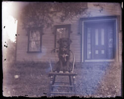 1 Late 1800searly 1900s Glass Negative, Dog On Chair, Unknown Location