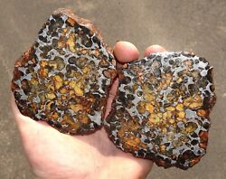 Huge Sericho Pallasite Meteorite From Habaswein Kenya Africa 1156 Gm Etched Pair