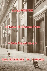 Cats 1956 Streets Of Naples Italy Lamps Stone = Poster 10 Sizes 17 To 4.5 Feet