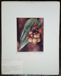 Wildflowers And Plants Kodachrome Photos Electronic Flash Cohasset Chestnut Hill