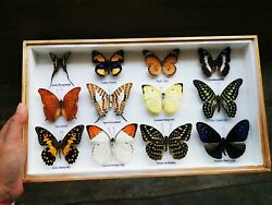 Real Mix 12 Butterfly Insect Taxidermy In Box Wood Frame Display Home Decor