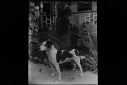 Antique 4x5 Inch Plate Glass Negative Of A Dog Standing Amongst The Leaves E12