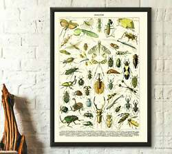 Poster / Affiche - Insects Vintage Science Print 1909 - Adolphe Millot Poster In