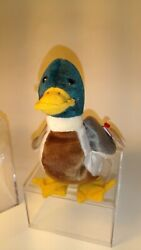 Rare Mint Ty Jake The Duck Retired 1997 1998 All 7 Mistakes
