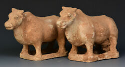 Tang Dynasty A Pair Of Antique Chinese Pottery Standing Cow