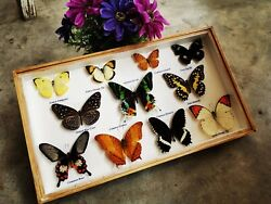 Mix 11 Butterfly Insect Taxidermy Box Wood Frame Display Home Decor-madaguscar