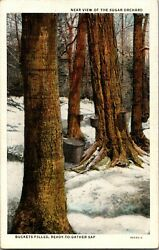 View Of Sugar Orchard, Making Maple Sugar Vintage Postcard Buckets Filled
