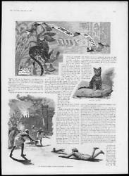 1888 Antique Print - Africa Cat Egypt Suicide Herodotus Holiness Jewellery242