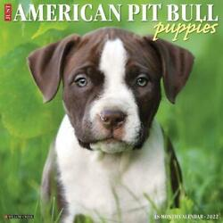 Just American Pit Bull Terrier Puppies 2022 Wall Calendar Dog Breed by Willow