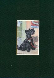 * Scottish Terrier - Dog Art Print - CLEARANCE