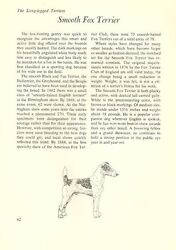 The Smooth Fox Terrier - Vintage Dog Art Print - Matted