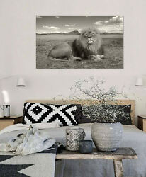 3d Africa Lion 792 Wall Stickers Vinyl Wall Murals Print Decal Art Aj Store Ca