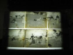 6 Antique 5 X 4 Dog And Puppies Puppy Glass Negative Slides