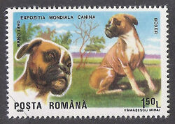 Dog Art Head amp; Body Portrait Postage Stamp UnCropped BOXER Romania 1990 MNH