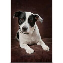 Poster Print Wall Art entitled Jack Russell Terrier On A Brown Studio Background