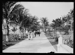 1906 Photo Of In The Grounds Of The Royal Poinciana Palm Beach Fla C