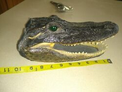 Authentic 10quot; Alligator Head From Real Alligator Taxidermy