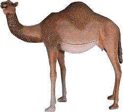 85 Life Size Tan Male Camel Resin Statue Nativity Prop Display Zoo Display