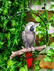 Hanging Grey Macaw Parrot Bird Perching On Branch With Metal Round Ring 13.5 H