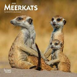 Meerkats 2020 Mini Wall Calendar By Browntrout Publishers Ltd. Book The Fast