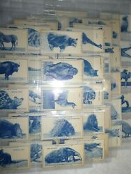 Turf Cigarette Cards Set 50 Zoo Animals Cigarette Cards, In Plastic Sleeves
