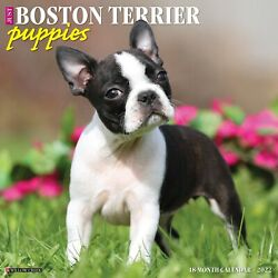 Just Boston Terrier Puppies 2022 Wall Calendar Dog Breed Free Shipping