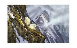 Michael Coleman In The Cliffs - Rocky Mountain Goats Canvas Giclee