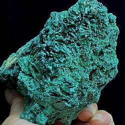 446g Natural Green Acicular Malachite Crystal Mineral Specimen/ From Congo