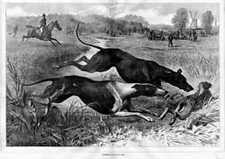 Greyhound Dogs Coursing For Hare Rabbit Hunt Horses