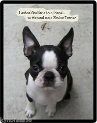 Boston Terrier True Friend Refrigerator Magnet