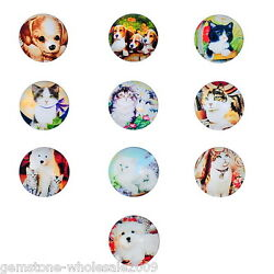 10-1000 Wholesale Lots Glass Dome Cabochons Pet Embellishment Round Mixed 20mm