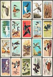 1965 Brooke Bond Birds Of North America Trading Cards Complete Set Of 48