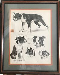 Boston Terrier Lithograph of Drawings Signed