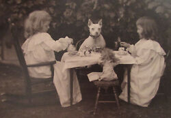 ANTIQUE 1890S WHITE AMERICAN BULL TERRIER PHOTO WITH CHILDRED & DOLL 10 X 12
