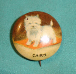 Old CAIRN Terrier Dog Lithograph Pinback Button in Color
