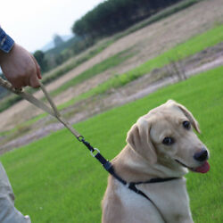 Heavy Duty Quick Release Dog Lead With Control Handle Bungee Leash in 3 Colours
