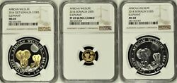 2014 Somalia African Wildlife Set Of 3 Gold And Silver Ngc Ms69ms68 And Pf69