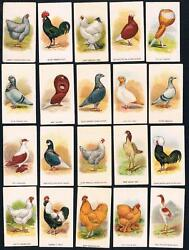 1911 Itc C54 Fowls Pigeons And Dogs Tobacco Cards Complete Set Of 50