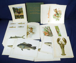 Antique Fish And Game Of The State Of New York 7th Report 100 Prints In Folder