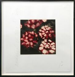 Donald Sultan Roses 1992   Hand Signed Print   Framed   Others Avail   Gallart
