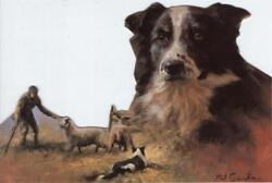 Border Collie Note Card: Border Collies by Mick Cawston Pack of 5 Die Cut LAST 1