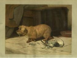 DOG WITH GUILTY LOOK KNOWS HE IS THE CULPRIT EATING DOVE BIRD BY ARTHUR BATT