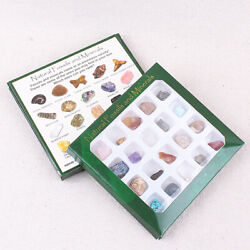 20Pcs Fossil And Mineral Specimen Teaching School Collection Fossil Rock Display $7.99