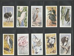 Brooke Bond Tea 1965 Rhodesian Issue African Birds All Scanned Mint Condition
