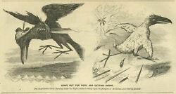 Confederate Crow Deeming Itself As Eagle Going Out For Wool And Getting Shorn