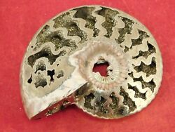 A Big Very Rare Polished Iridescent Pyrite Ammonite Fossil Russia 73.7gr
