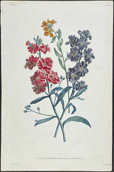 Prevost - Clove. 8, 1805 Collection Hand-colored Stipple Engraving