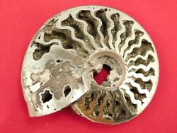 A Big Very Rare Polished Iridescent Pyrite Ammonite Fossil Russia 109gr