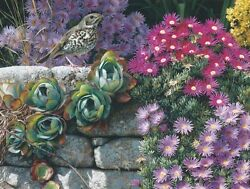 Carl Brenders Singer In Paradise, Song Bird, Wood Thrush, Giclee Canvas A/p3/40