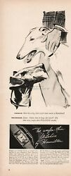 1939 Hamilton Watch Company Lancaster Pa Wilshire Airedale Wolfhound Dog Art Ad